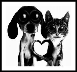 Psim i kocim okiem